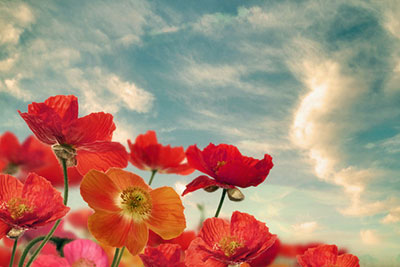 Flowers offered to the sky